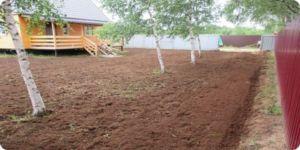 озеленение грунта